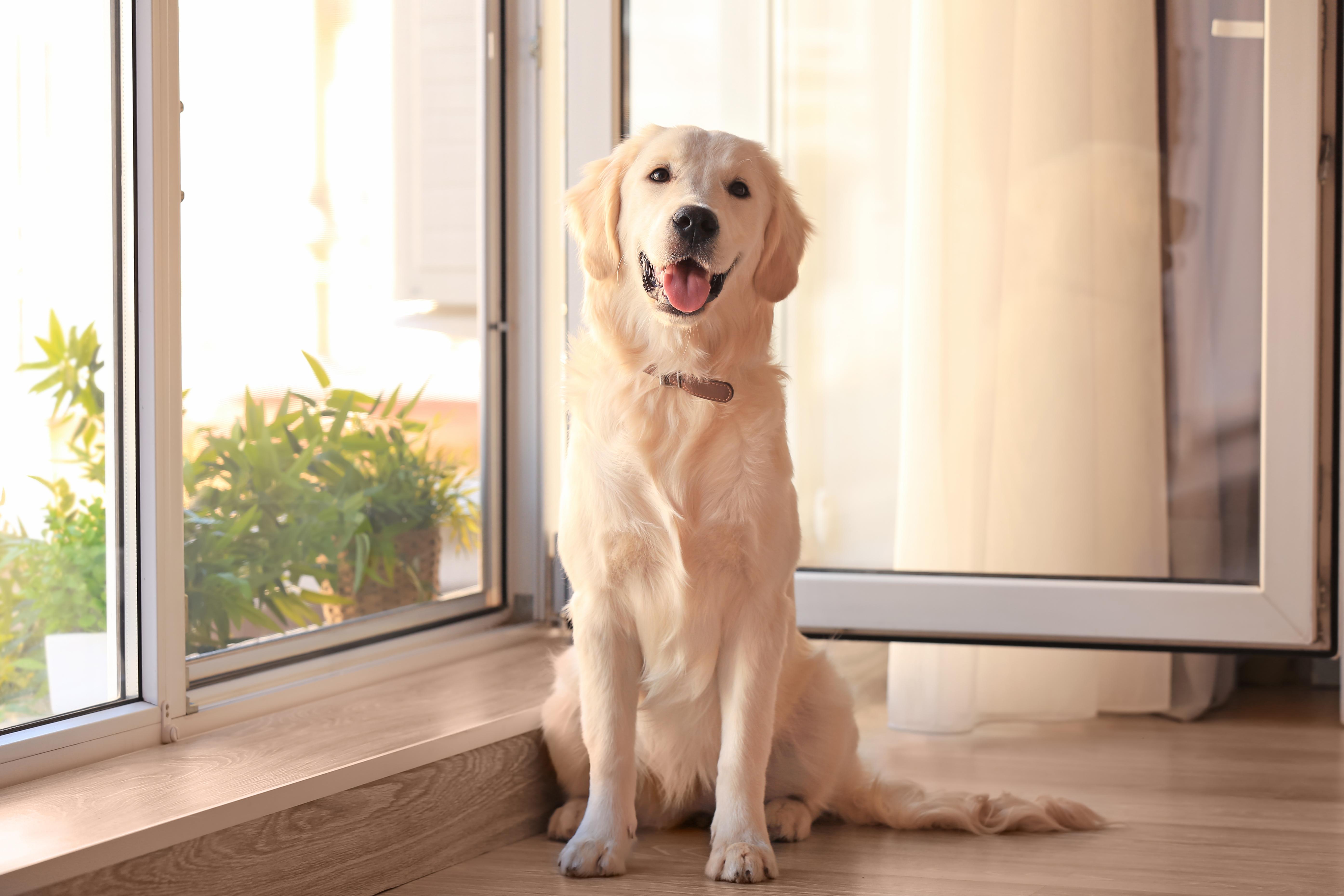 winco-dog